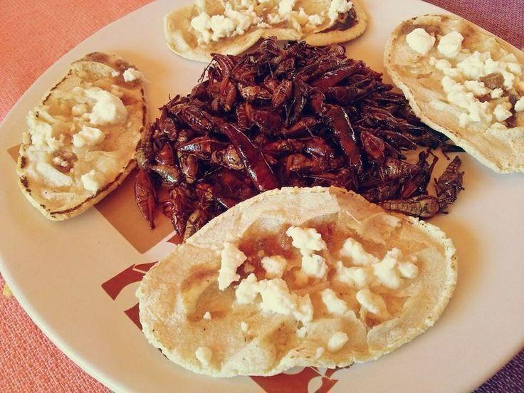 Comida mexicana exotica chapulines y memelitas sopes tacos ...