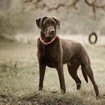 689 best images about Lost Pets in Texas on Pinterest ...