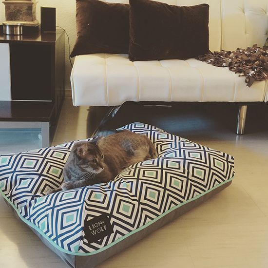 Hereu0027s A New Line Of Beautiful Pet Beds Created For Design Conscious Pet  Owners (