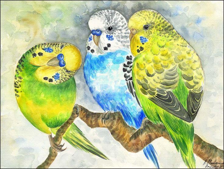 Original Aquarell Bild Vogel Wellensittiche Papageien Vogel Vögel Watercolour Budgerigars Parrots Budgies Birds Parrakets