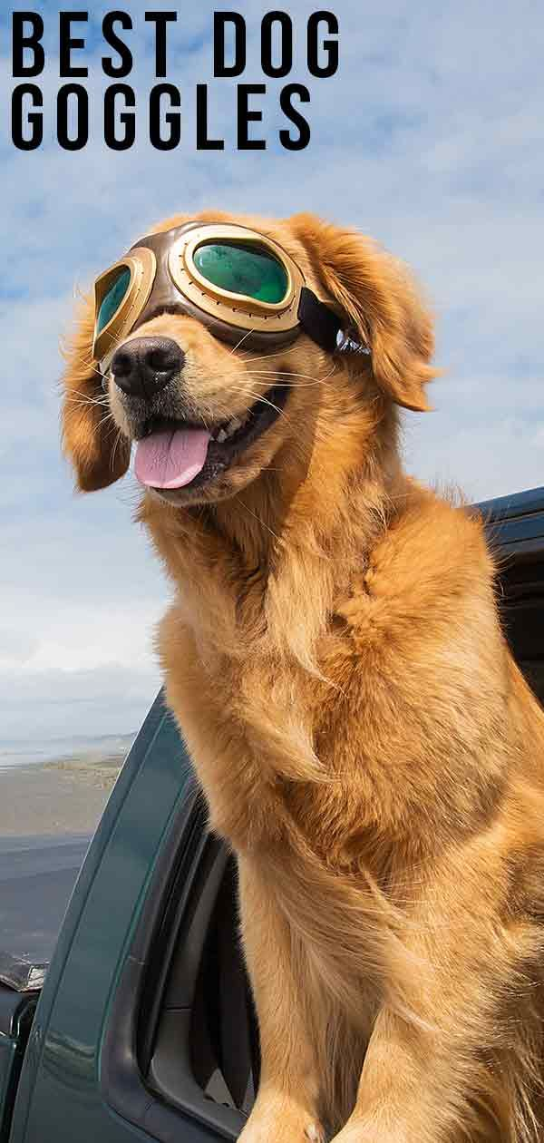 Best Dog Goggles For Keeping Their Eyes Safe Or Just Looking Cool Dog Goggles Dogs Best Dogs