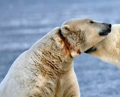 Petition · Save Andy, the polar bear suffering from abusive science · Change.org