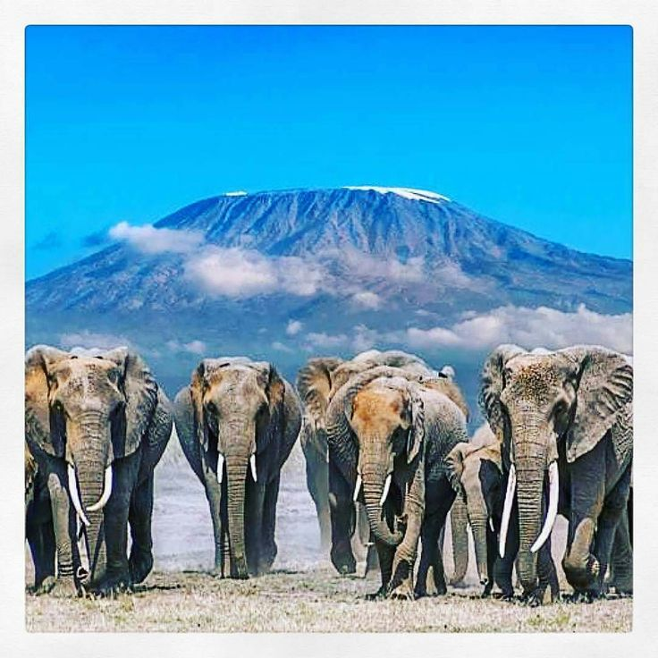 @gelaleroux -  We are a TRIBE of sisters WARRIORS game CHANGERS movers and SHAKERS connected by an invisible force #mrssatop25 @tammytaylornailssouthafrica @mrs_south_africa  @elephantcharisma (@get_repost) For info about promoting your elephant art or crafts send me a direct message @elephant.gifts or emailelephantgifts@outlook.com  . Follow @elephant.gifts for inspiring elephant images and videos every day! . .  #elephant #elephants #elephantlove