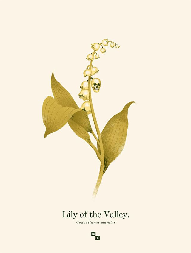 Lily of the Valley by Phantom City Creative-breaking bad