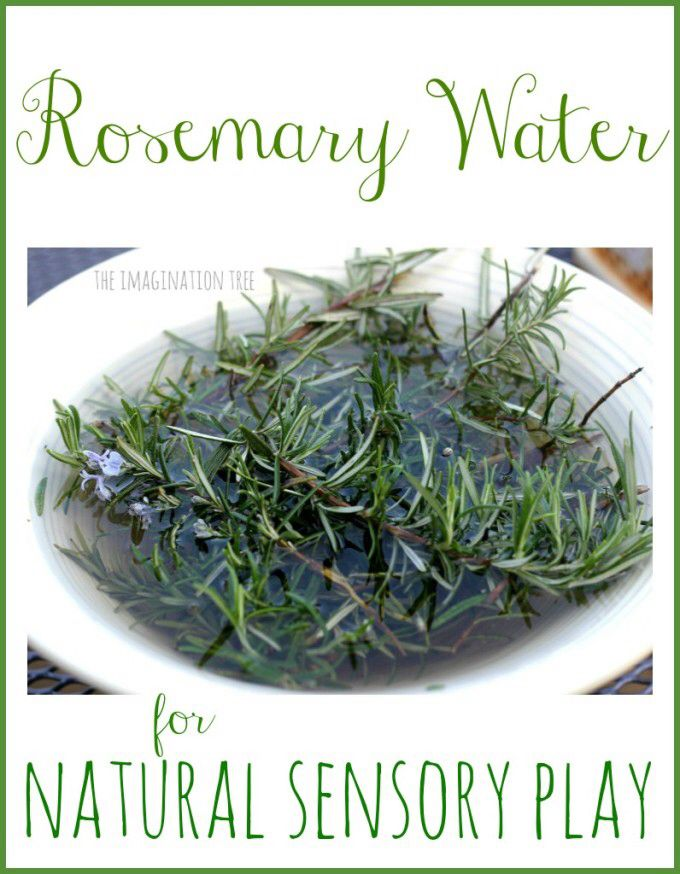 Make some rosemary water for sensory and a natural exploration table. From the imagination tree