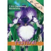 Iris - Germanica Blå och Vit