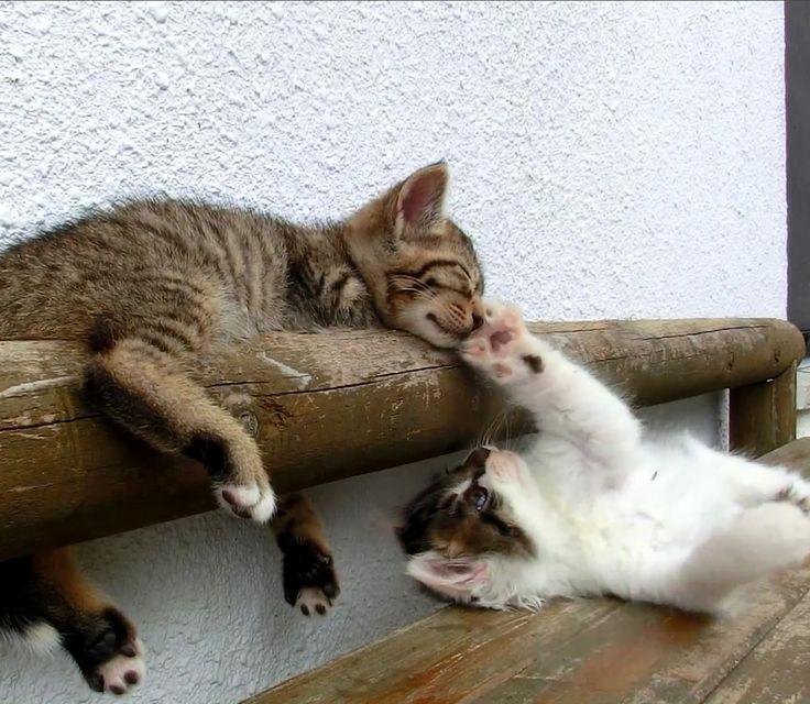 Feel-Good Video of the Week: Kitty Won't Let Friend Sleep