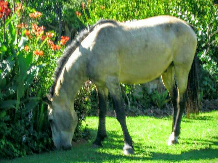 A wild horse grazing on the lawn next to our B&B. What a beaut.