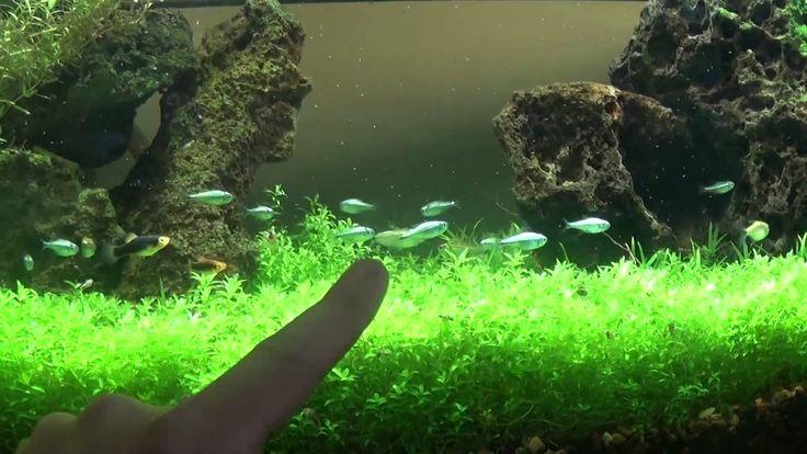 Best DIY planted aquarium LED lighting