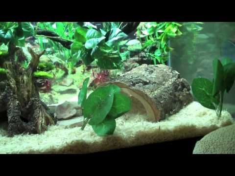 The coolest snake tank ever guaranteed - YouTube
