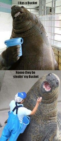 I has a bucket!