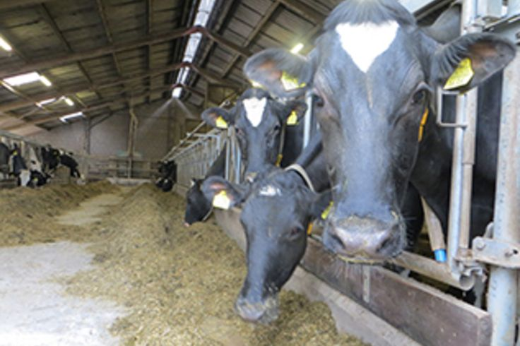 Familie Jans succesvol in preventie ketose - Elanco - Melkvee.nl - nieuws voor de melkveehouder