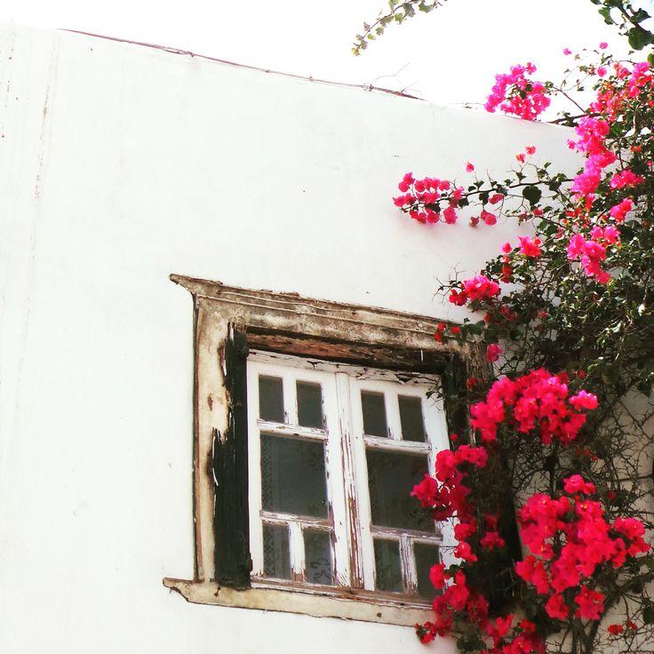 Beautiful pink flowers climb an old greek building in Mykonos town.. #mykonos #holiday #architecture #pink #flowers #mykonoslife #visitgreecegr #contrast #travel #mediterranean #colour