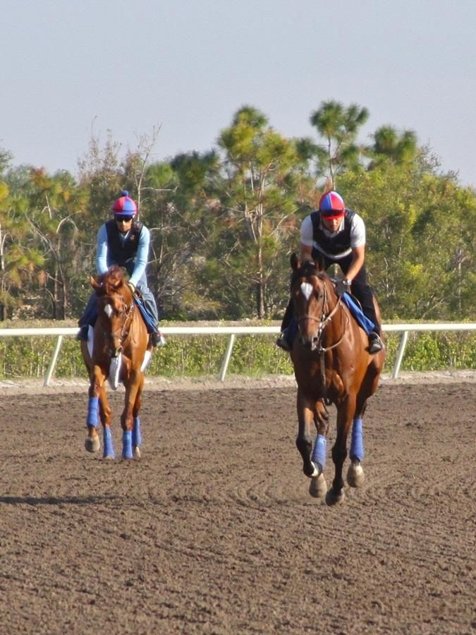 Florida training center Palm Meadows serves the South Florida racetracks.  Animal Kingdom and Went the Day Well training together at Palm Meadows on November 26, 2012. Both horses are owned by Team Valor and trained by Graham Motion.