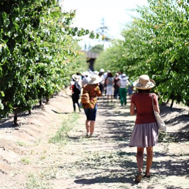 The Sweet Spot: Stone Fruit Tour in the San Joaquin Valley | CUESA