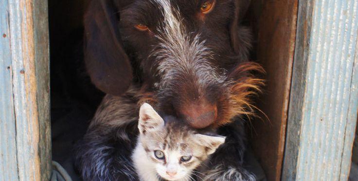 Ração para cachorros e gatos
