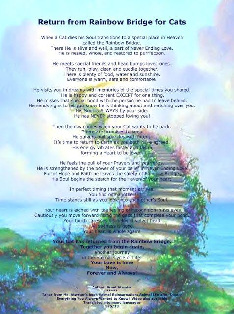 Rainbow Bridge Cats | PM-Cat Pet Heaven Cat's Rainbow Bridge Poem - Hope After Pet Loss Cat ...