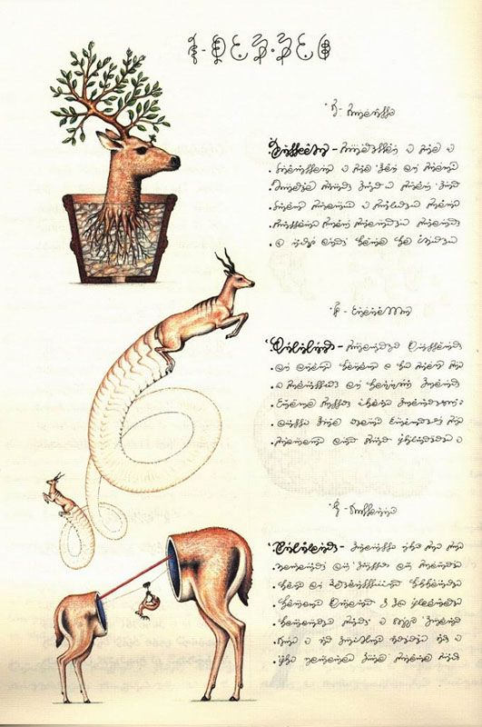 Page from the Codex Seraphinianus, an illustrated encyclopedia of an unknown, parallel world, created by the Italian artist, architect and industrial designer Luigi Serafini during thirty months, from 1976 to 1978. The book is approximately 360 pages long (depending on edition), and written in a strange, generally unintelligible alphabet.