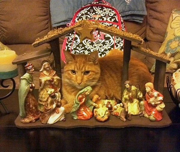 25 Cats who want to be in the spotlight in Christmas