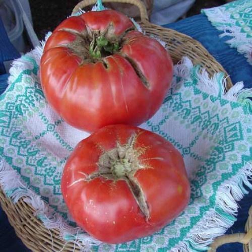Mortgage Lifter Tomato 1/4 oz