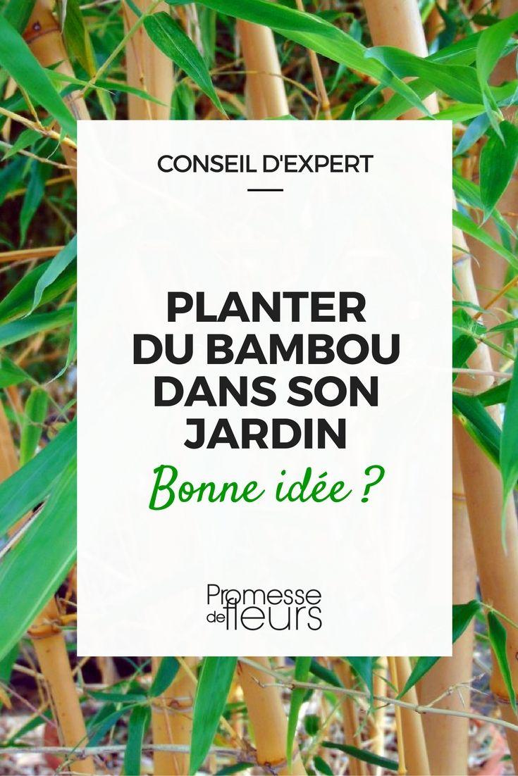 Les 25 meilleures id es de la cat gorie bambou sur for Conseil plantation jardin
