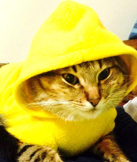 Gato rapero, mascota de la casa. #cat #rapper