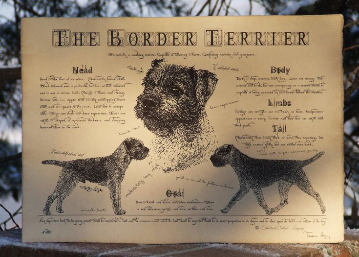 Antique styled dog standard - Border Terrier by Creativedoglover on Etsy