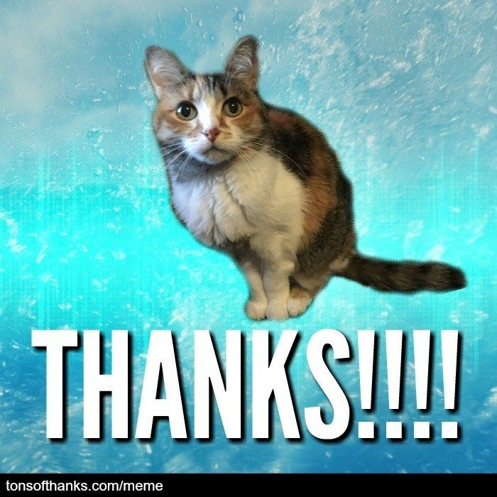 51 Nice Thank You Memes With Cats Thank You Memes Cats Cat Memes