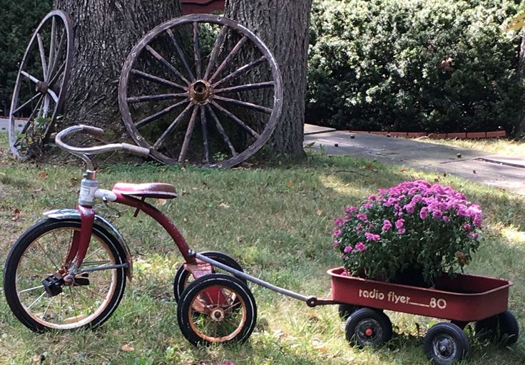 #antique #antiques #autumn #fall #garden interest #radio flyer #radio flyer wagon #red tricycle #red wagon #tricycle #tricycle and wagon #wagon #wagon wheel #wagon with mums #wheels