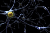 How an error during transcription could have led to the evolution to the human brain