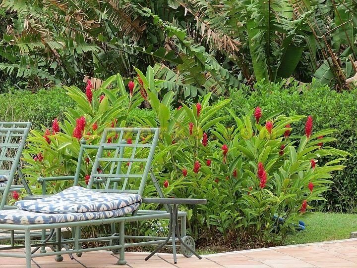 Экзотические растения - поражают красотой и формами