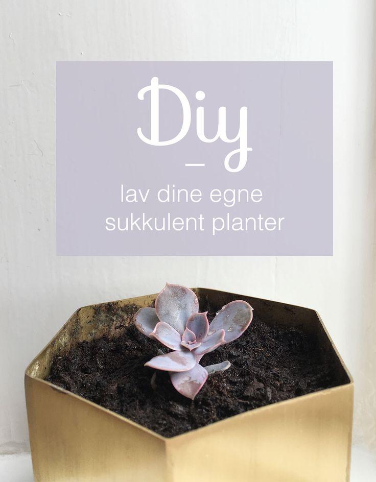 Guide til at lave dine egne sukkulent planter. En proces der kræver tålmodighed men er yderst spændende at holde øje med.