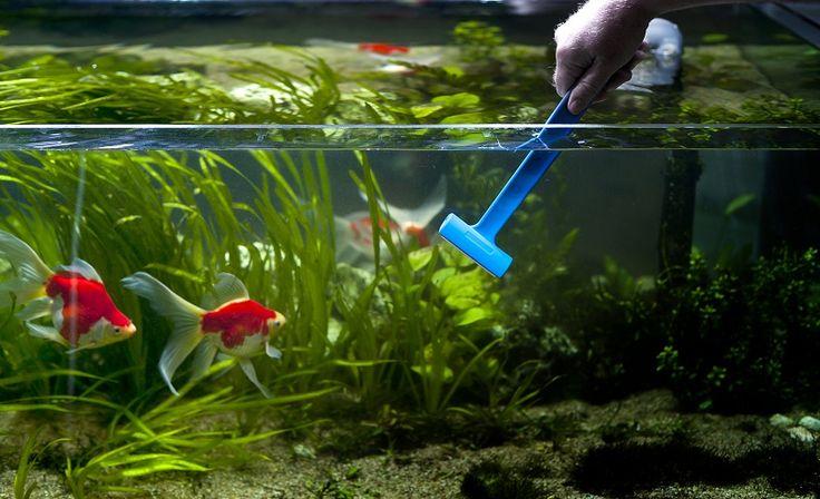 Как ухаживать за аквариумом, советы по уходу