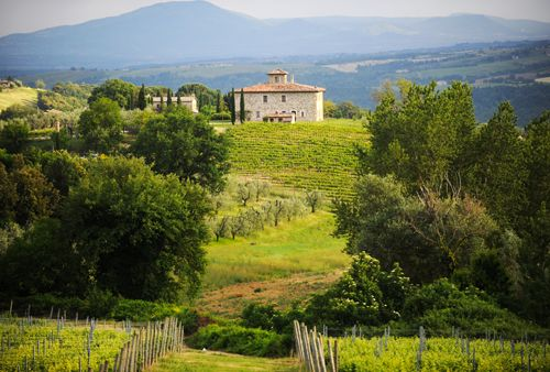 Visiting some of the best local Cantine (wine estates) in the Orvieto area for a tour, a wine tasting and the chance to buy some of your favourite wines.