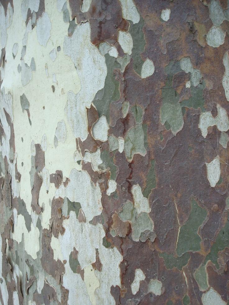 écorce arbre platane camouflage kaki beige gris