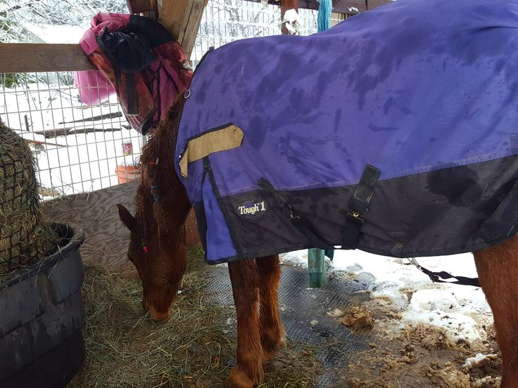 8am changed  overnight heavy blanket to another heavy duty blanket  11:15.. to much wet sleet in snow = cganged blanket again. Abd knock out frozen ice in hooves!