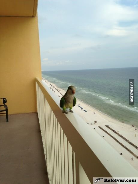 This little guy comes to visit every day at our condo in Panama City Beach. (Heap of Fun) - http://relolver.com/this-little-guy-comes-to-visit-every-day-at-our-condo-in-panama-city-beach/