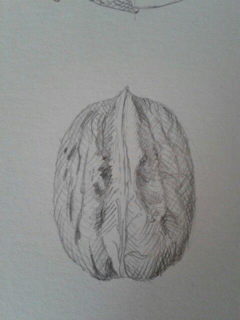 Nuez - lapiz- curso dibujo botanico Marta Chirino - made by pececito arcoiris