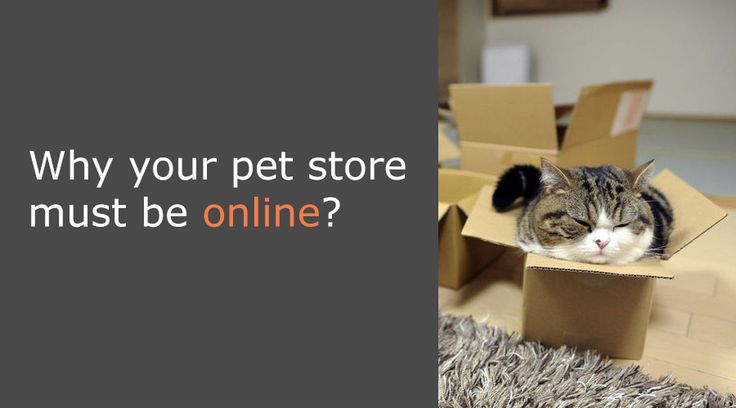 why your pet store must be online