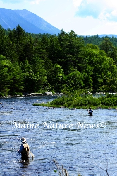 17 best images about penobscot river on pinterest trips for Fly fishing maine
