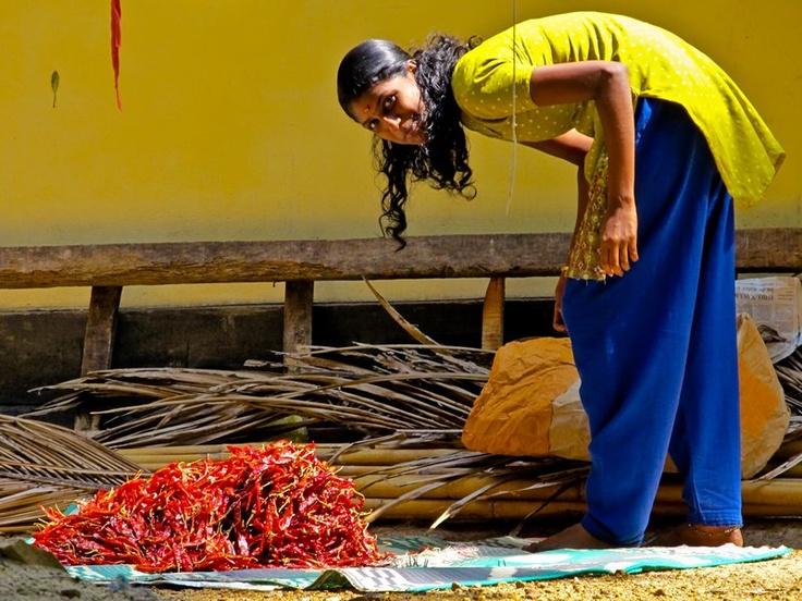 India.: Chilli Host, Red Chilli