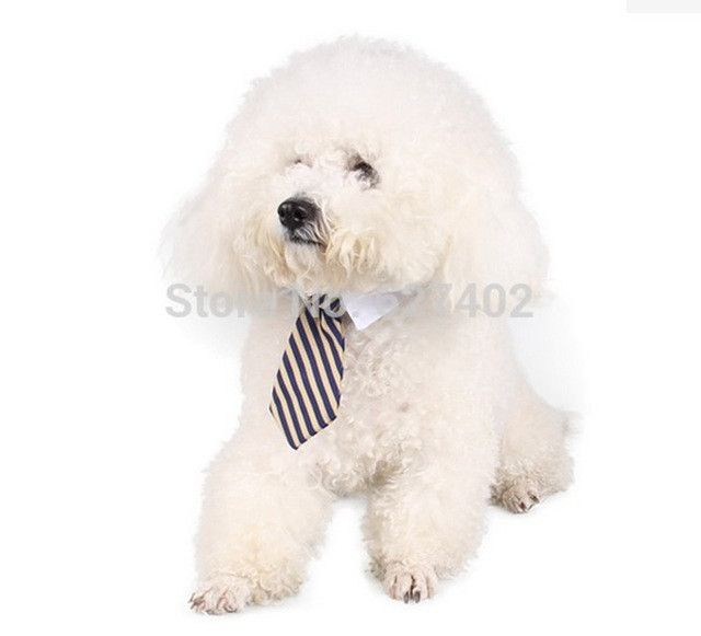 Dog Collar Cat Collar ,Pet bow ties, cat Tie, dog tie