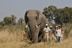 Okavango Delta - Botswana - Walking Safari