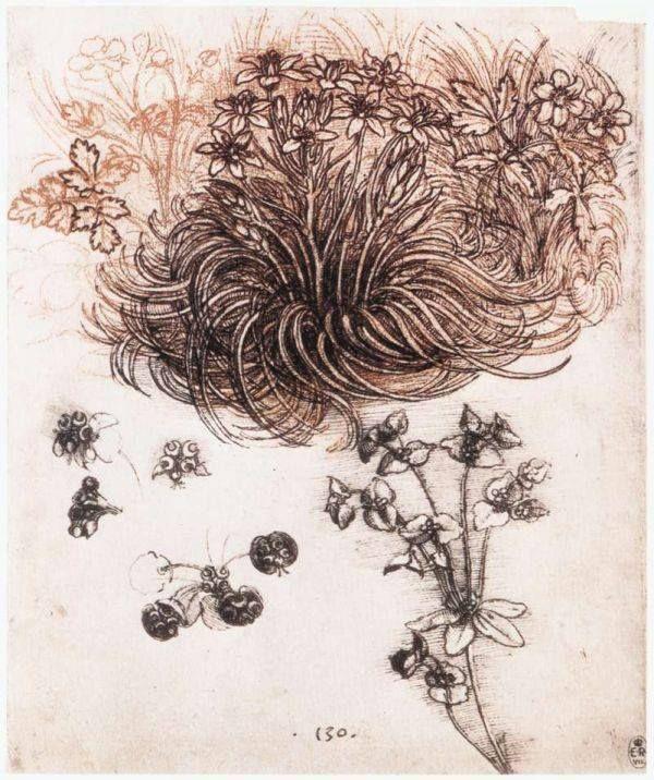 Star of bethlehem e altre piante 1505-07 penna e inchiostro sopra puntasecca su carta, 198 x 160 mm Leonardo Da Vinci  royal library, windsor