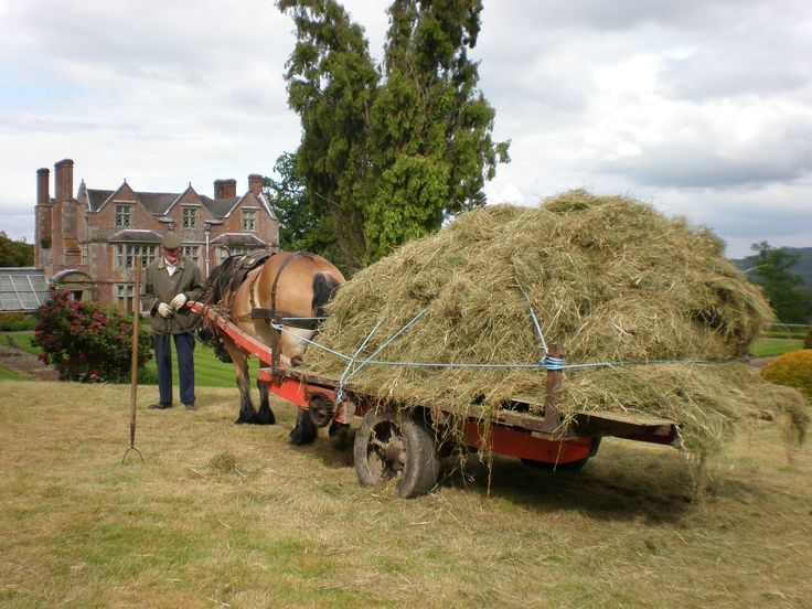 Loaded hay bogie | This Shropshire hay-bogie is a northern type of hay transporter that shares a common ancestry with the Icelandic variety. Smiler stands ready between the shafts with Mr Thomas Stackhouse-Acton esquire at his head.