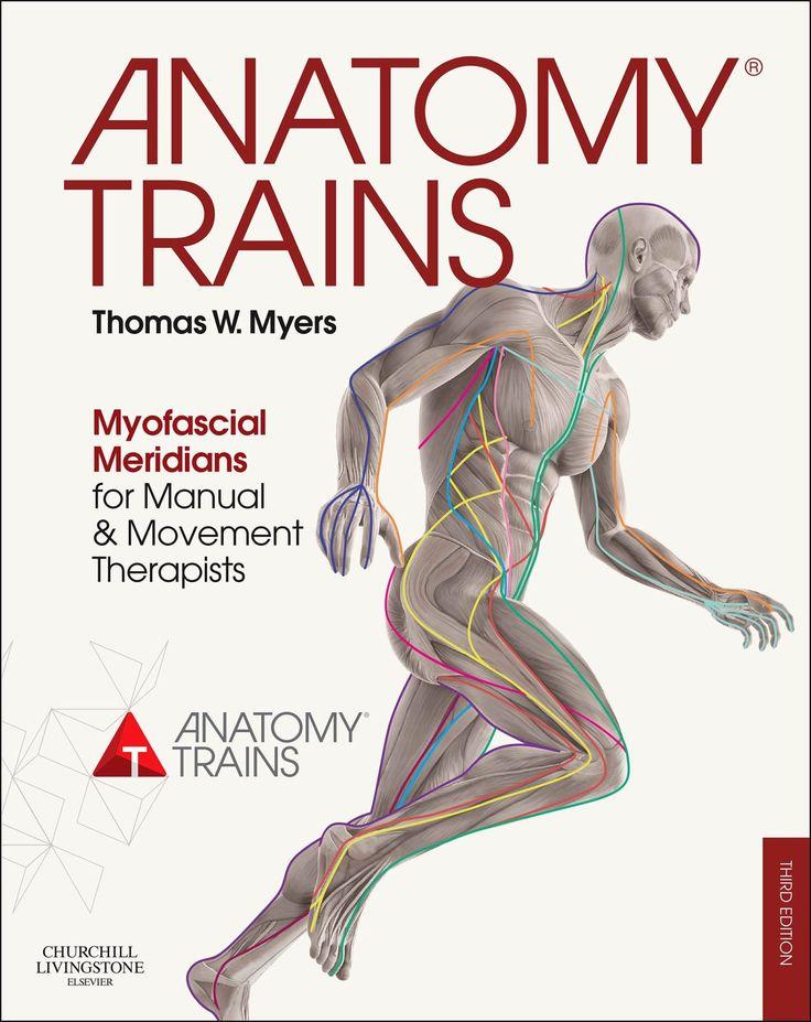 Mejores 52 imágenes de Anatomy en Pinterest   Fisioterapia, Anatomía ...