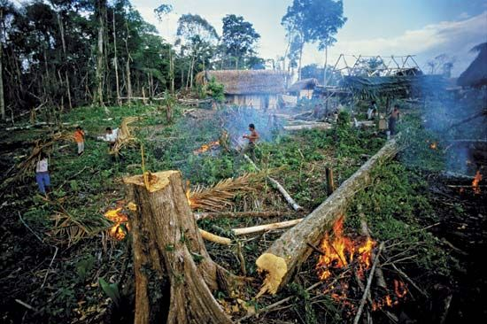 Guatemala: Deforestation in the Peten rainforest. Deforestation is ...