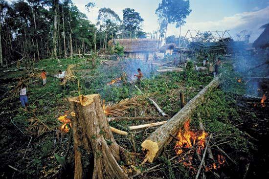 Guatemala: Deforestation in the Peten rainforest. Deforestation is ...