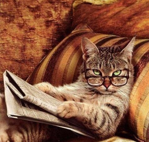 Dia de Gatos                                                                                                                                                      Más
