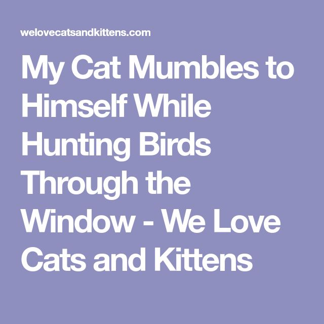 My Cat Mumbles to Himself While Hunting Birds Through the Window - We Love Cats and Kittens